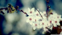 signs_of_spring-wallpaper-1920x1080