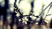 spring_dreaming-wallpaper-1920x1080