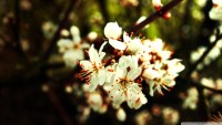 spring_flowers_bundle-wallpaper-1920x1080