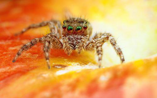 پس زمینه حیوانات عنکبوت