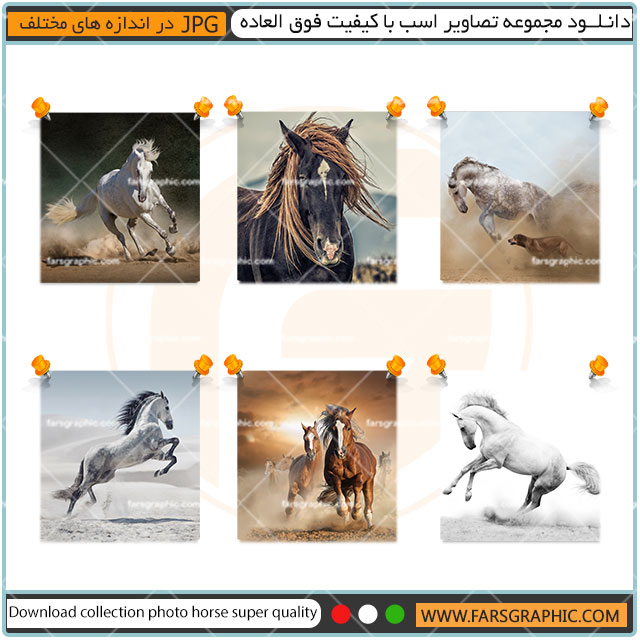 مجموعه تصاویر اسب
