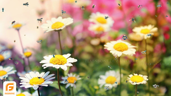 دانلود مجموعه فایل زنبور