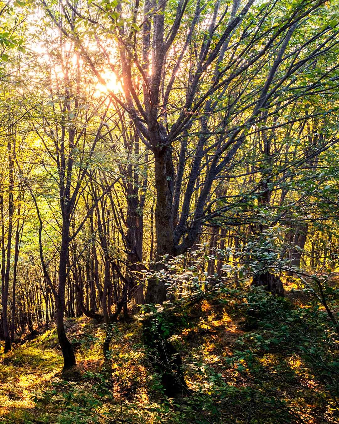 عکاسی از درخت